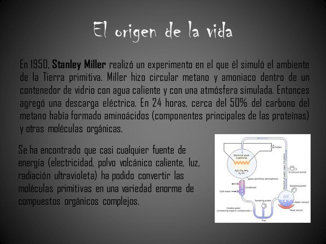 El origen de la vida En 1950, Stanley Miller realizó un experimento en el que él simuló el ambiente de la Tierra primitiva. Miller hizo circular metan