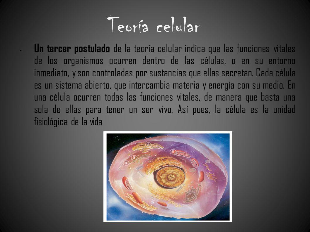 Teoría celular Un tercer postulado de la teoría celular indica que las funciones vitales de los organismos ocurren dentro de las células, o en su ento