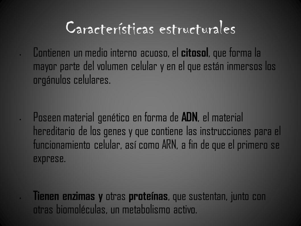Características estructurales Contienen un medio interno acuoso, el citosol, que forma la mayor parte del volumen celular y en el que están inmersos l