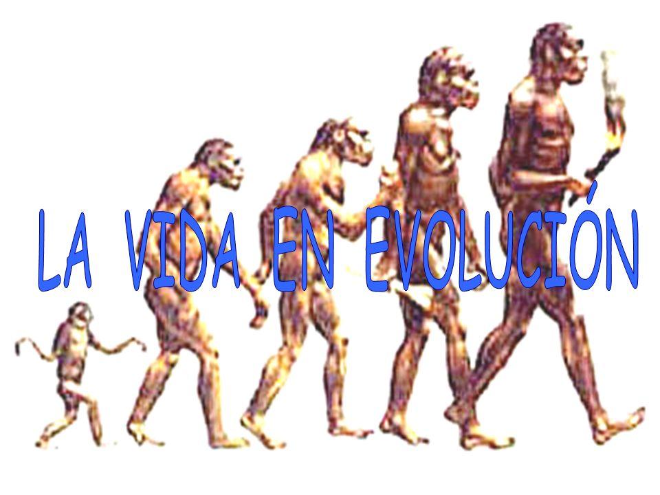 Clases de especiación: - geográficas, es el proceso mas común pero muy lento, puede durar millones de años.