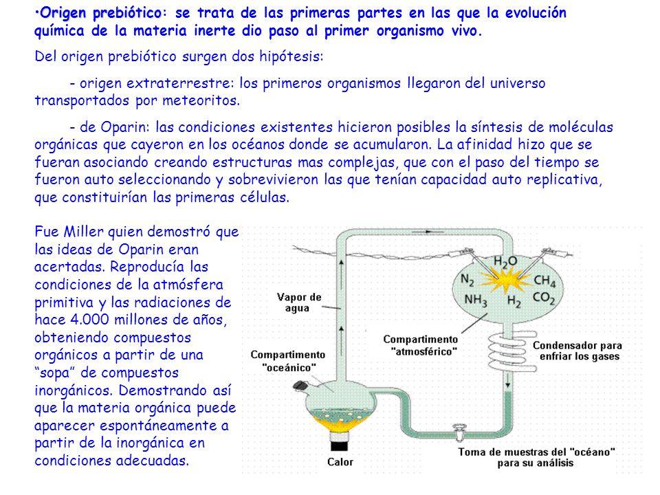 Origen prebióticoOrigen prebiótico: se trata de las primeras partes en las que la evolución química de la materia inerte dio paso al primer organismo
