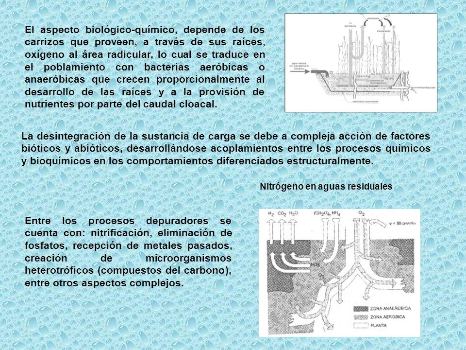 El aspecto biológico-químico, depende de los carrizos que proveen, a través de sus raíces, oxígeno al área radicular, lo cual se traduce en el poblami