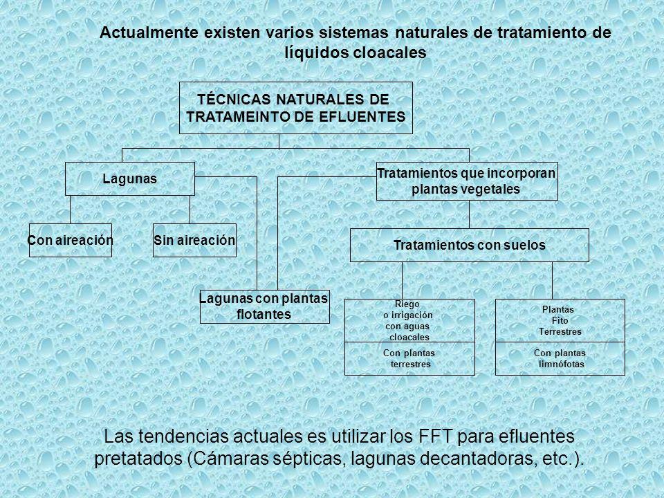 Actualmente existen varios sistemas naturales de tratamiento de líquidos cloacales Con plantas limnófotas TÉCNICAS NATURALES DE TRATAMEINTO DE EFLUENT