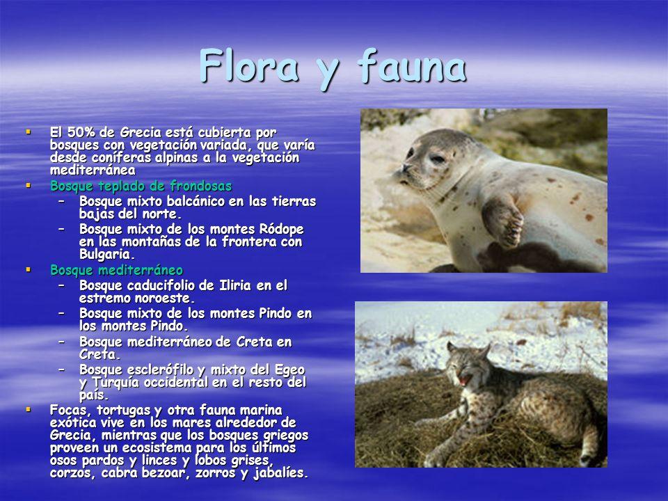 Flora y fauna El 50% de Grecia está cubierta por bosques con vegetación variada, que varía desde coníferas alpinas a la vegetación mediterránea El 50%