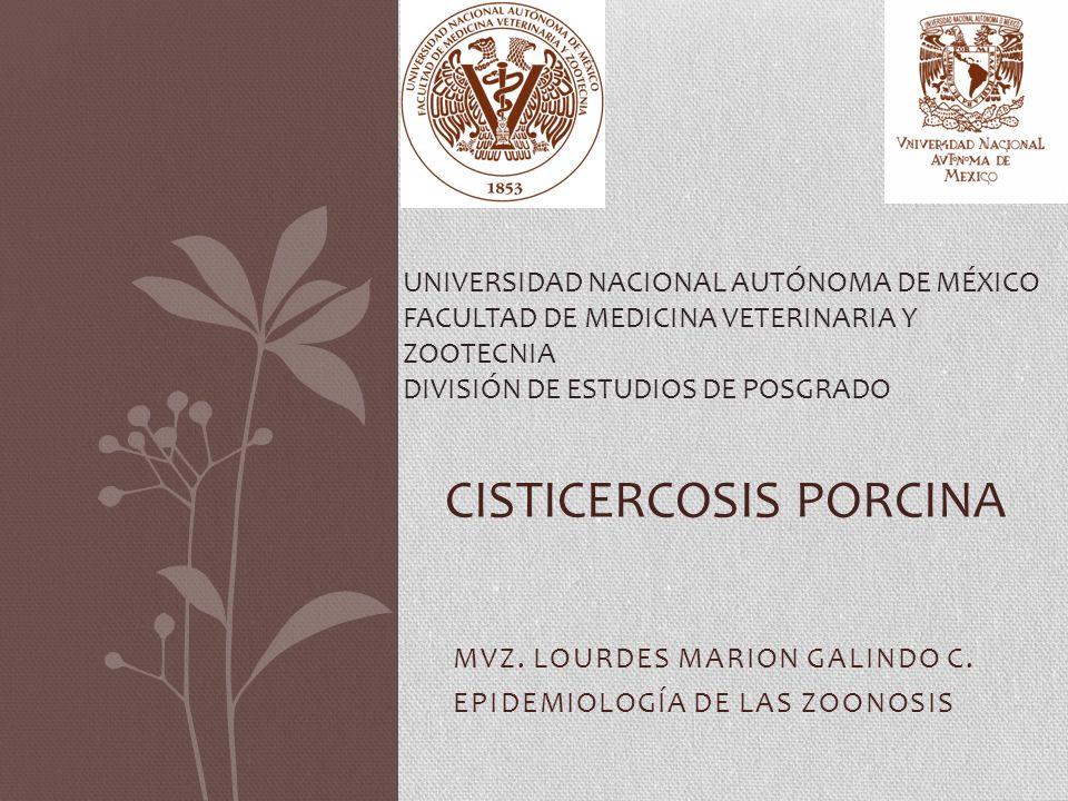 MVZ. LOURDES MARION GALINDO C. EPIDEMIOLOGÍA DE LAS ZOONOSIS CISTICERCOSIS PORCINA UNIVERSIDAD NACIONAL AUTÓNOMA DE MÉXICO FACULTAD DE MEDICINA VETERI