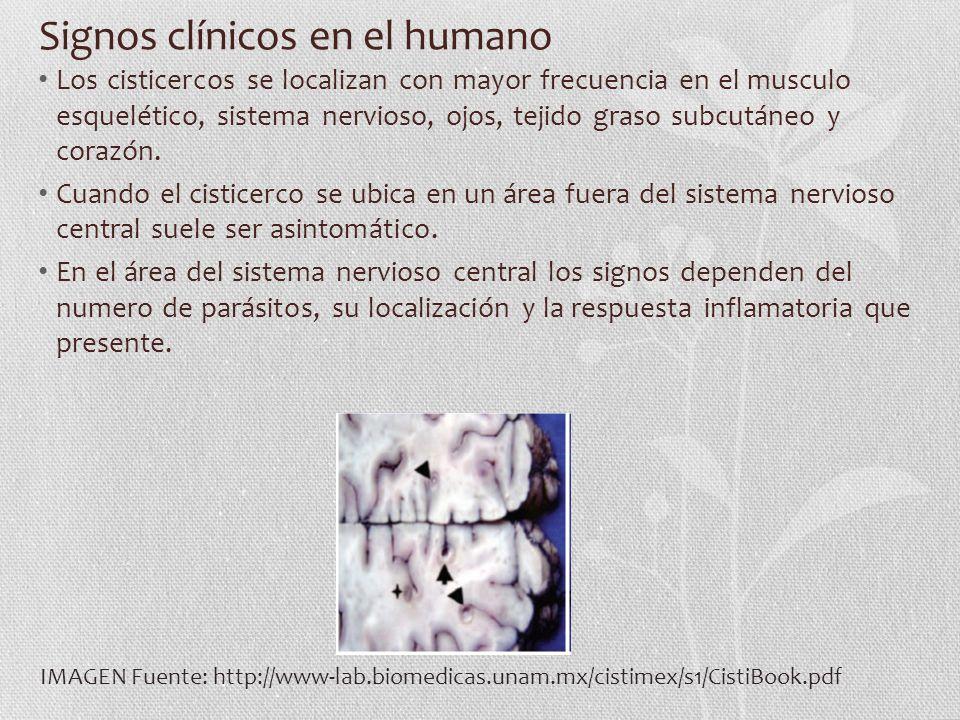 Signos clínicos en el humano Los cisticercos se localizan con mayor frecuencia en el musculo esquelético, sistema nervioso, ojos, tejido graso subcutáneo y corazón.