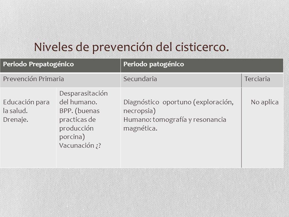 Niveles de prevención del cisticerco. Periodo PrepatogénicoPeriodo patogénico Prevención PrimariaSecundariaTerciaria Educación para la salud. Drenaje.