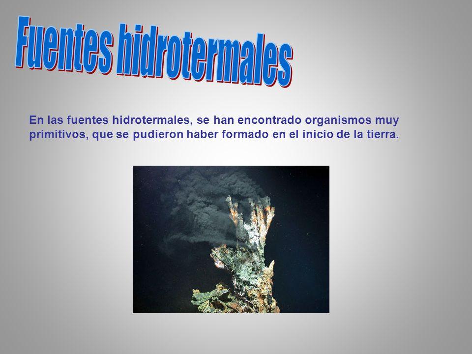 En las fuentes hidrotermales, se han encontrado organismos muy primitivos, que se pudieron haber formado en el inicio de la tierra.