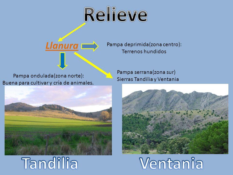Llanura Pampa ondulada(zona norte): Buena para cultivar y cría de animales.