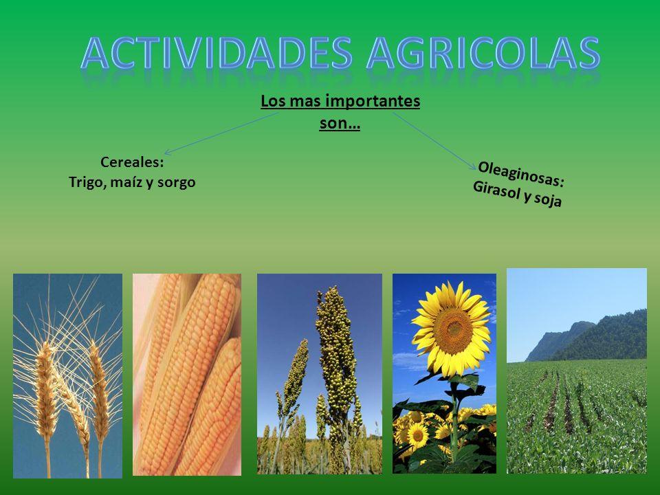Los mas importantes son… Cereales: Trigo, maíz y sorgo Oleaginosas: Girasol y soja