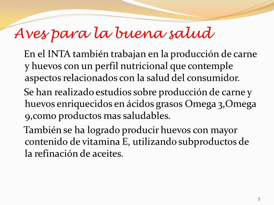 Aves para la buena salud En el INTA también trabajan en la producción de carne y huevos con un perfil nutricional que contemple aspectos relacionados con la salud del consumidor.