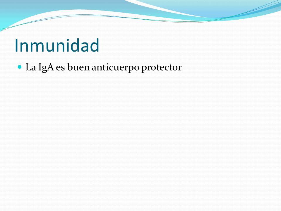 Inmunidad La IgA es buen anticuerpo protector
