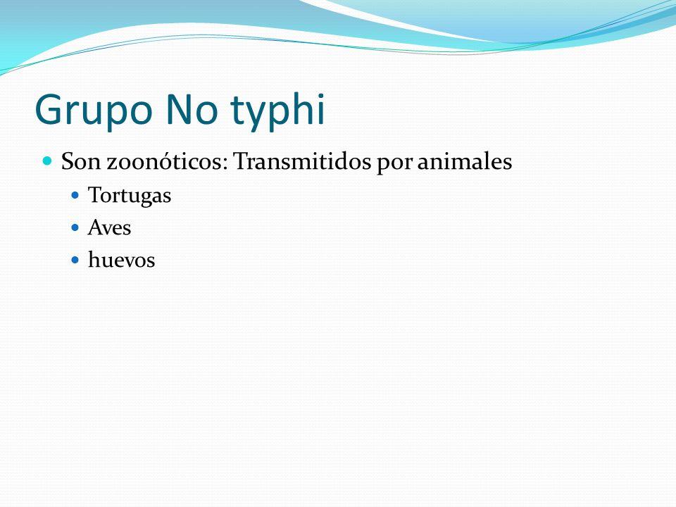 Grupo No typhi Son zoonóticos: Transmitidos por animales Tortugas Aves huevos