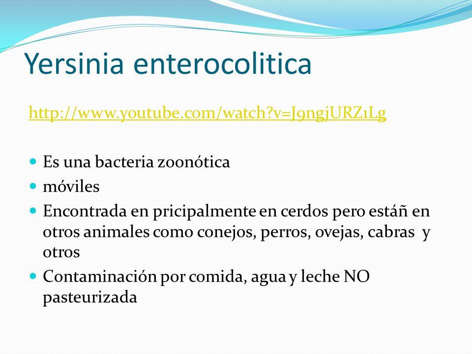 Yersinia enterocolitica http://www.youtube.com/watch?v=J9ngjURZ1Lg Es una bacteria zoonótica móviles Encontrada en pricipalmente en cerdos pero estáñ
