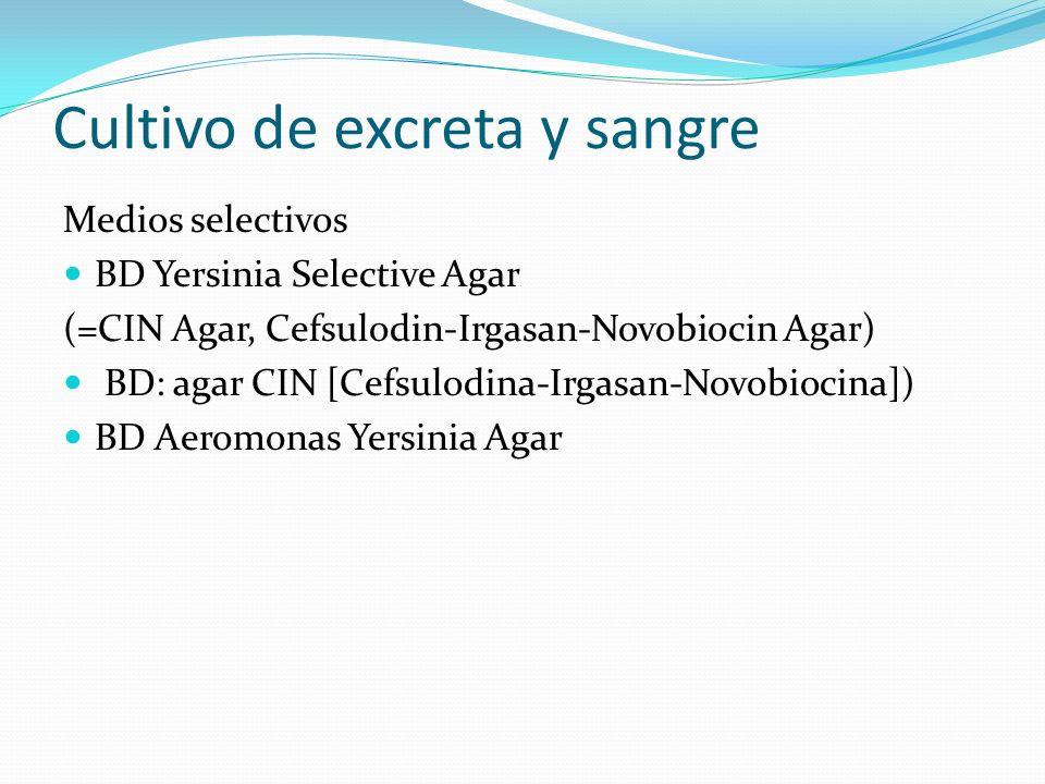 Cultivo de excreta y sangre Medios selectivos BD Yersinia Selective Agar (=CIN Agar, Cefsulodin-Irgasan-Novobiocin Agar) BD: agar CIN [Cefsulodina-Irg