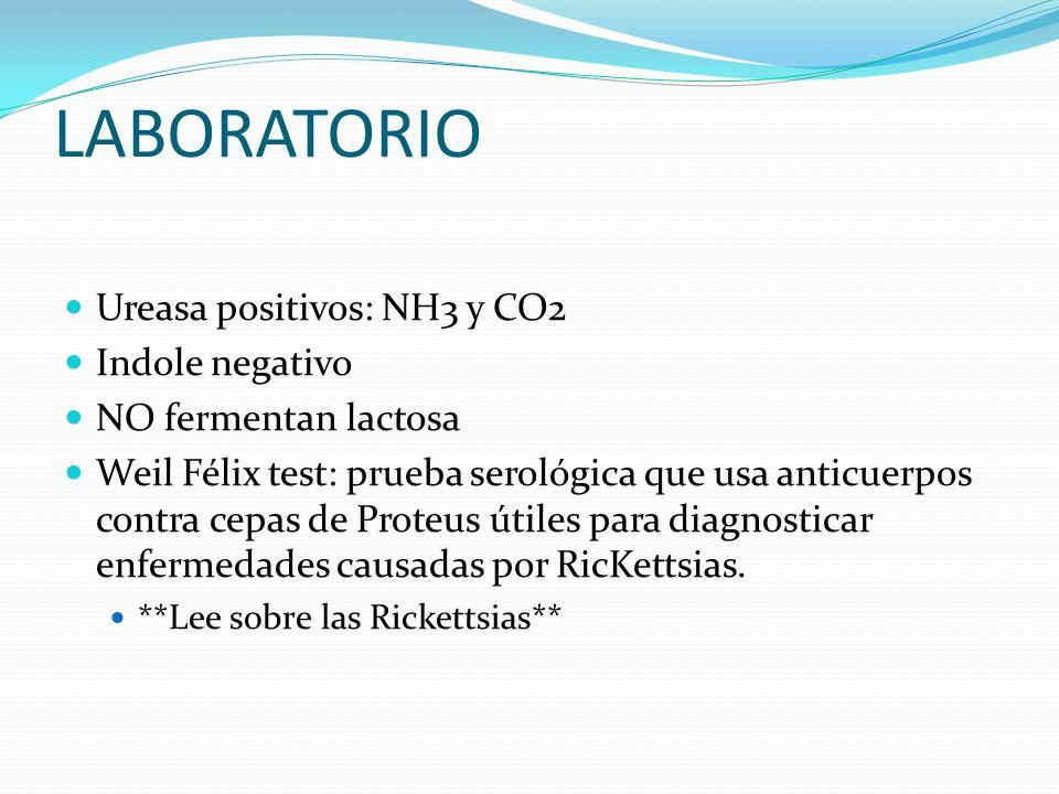 LABORATORIO Ureasa positivos: NH3 y CO2 Indole negativo NO fermentan lactosa Weil Félix test: prueba serológica que usa anticuerpos contra cepas de Pr