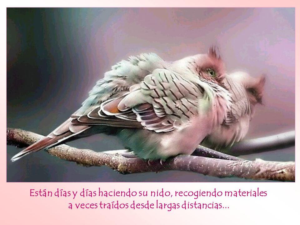 ¿Te has puesto a observar la actitud de los pájaros ante las adversidades?