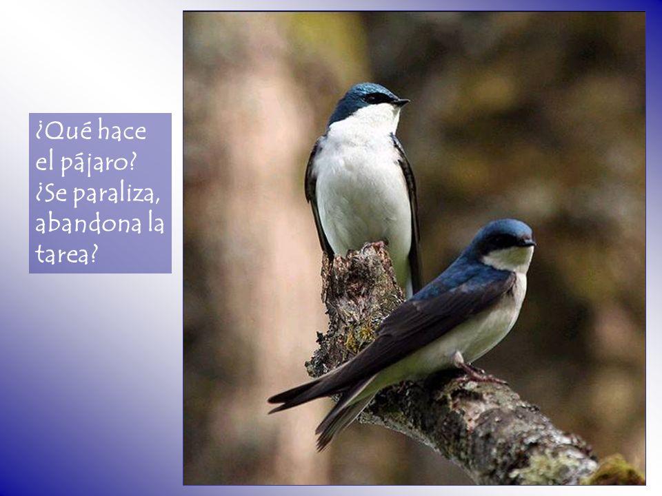 ¿Qué hace el pájaro? ¿Se paraliza, abandona la tarea?