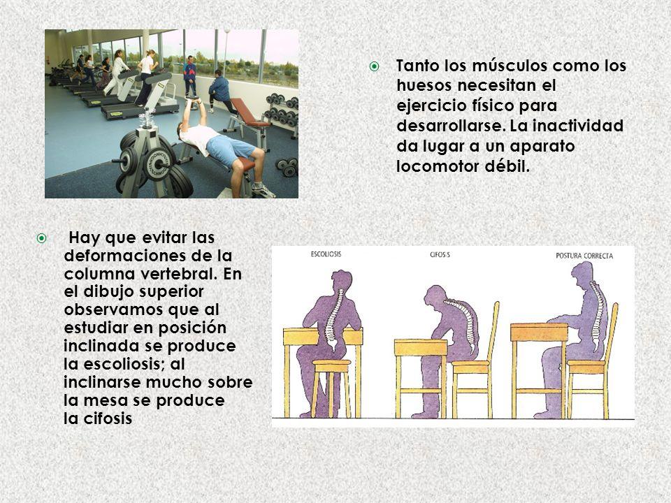 Tanto los músculos como los huesos necesitan el ejercicio físico para desarrollarse.