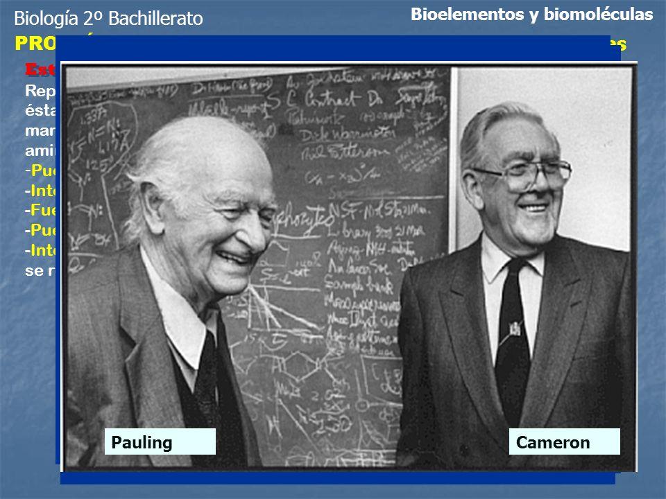 Biología 2º Bachillerato Bioelementos y biomoléculas PROTEÍNAS Niveles de organización estructural de las proteínas Repliegues de la cadena peptídica,