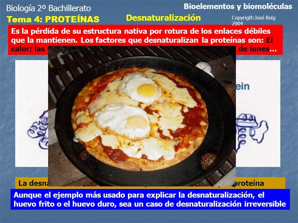 Biología 2º Bachillerato Bioelementos y biomoléculas Tema 4: PROTEÍNAS Desnaturalización Es la pérdida de su estructura nativa por rotura de los enlac