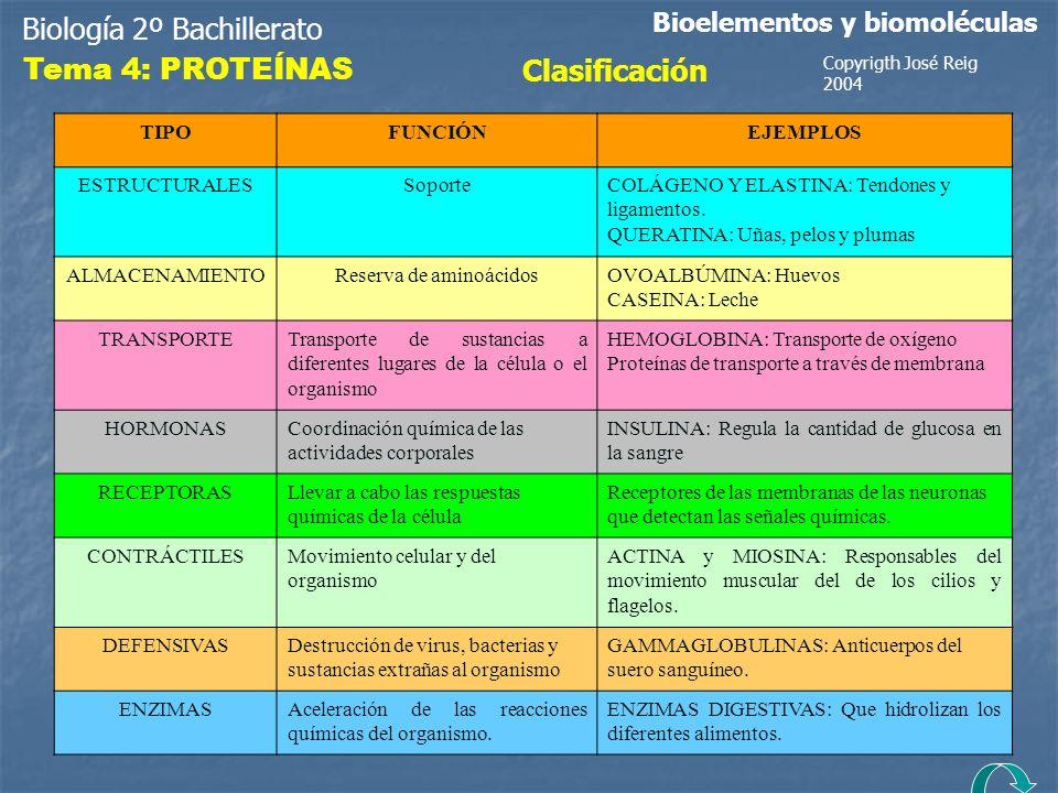 Biología 2º Bachillerato Bioelementos y biomoléculas Tema 4: PROTEÍNAS Clasificación TIPOFUNCIÓNEJEMPLOS ESTRUCTURALESSoporteCOLÁGENO Y ELASTINA: Tend