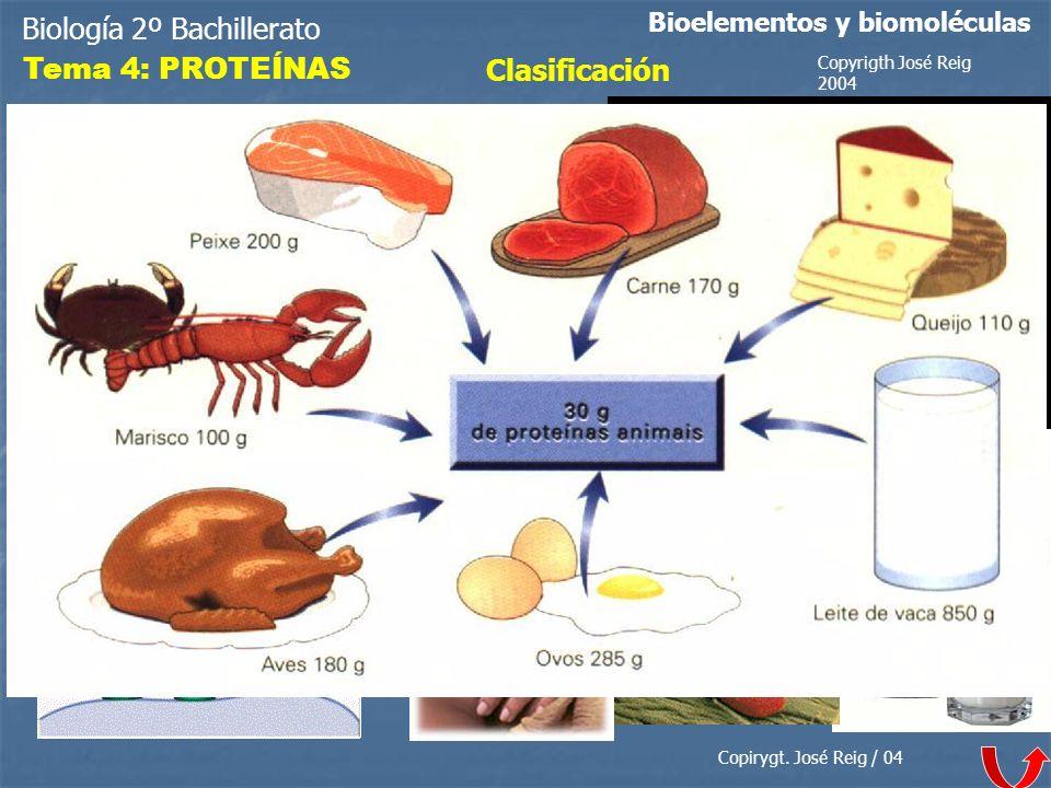 Biología 2º Bachillerato Bioelementos y biomoléculas Tema 4: PROTEÍNAS Clasificación Copirygt. José Reig / 04 Copyrigth José Reig 2004