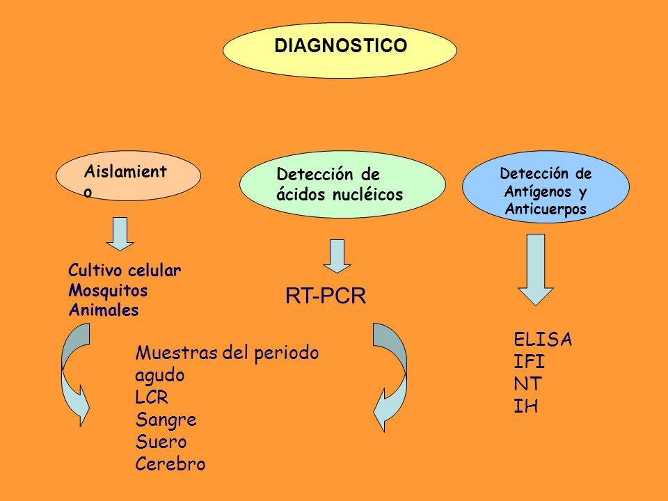 DIAGNOSTICO Aislamient o Cultivo celular Mosquitos Animales Detección de ácidos nucléicos Muestras del periodo agudo LCR Sangre Suero Cerebro Detecció