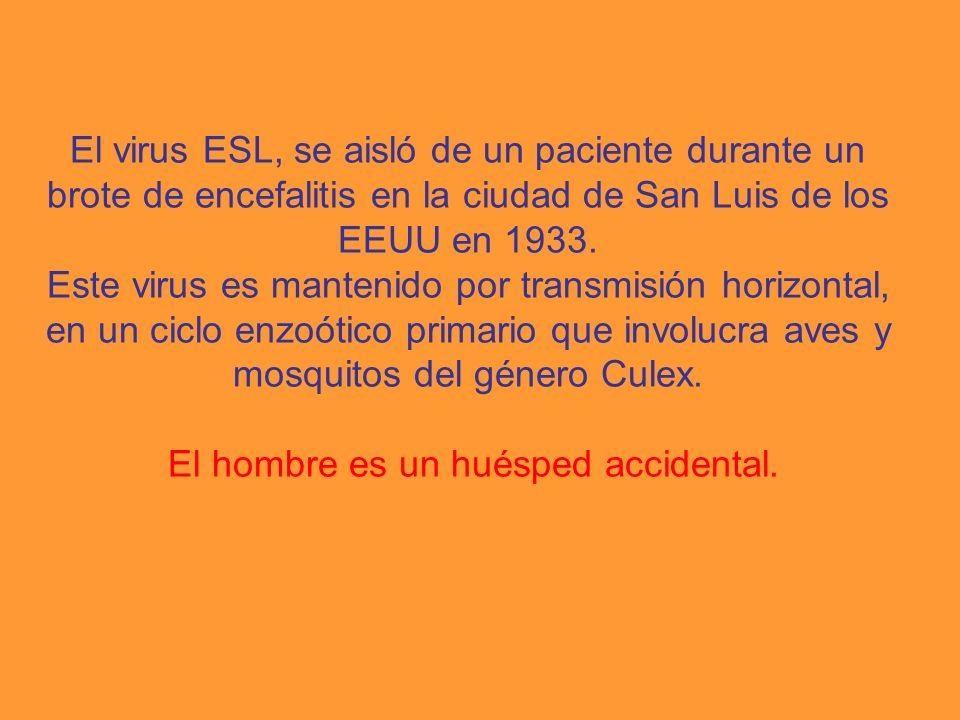 El virus ESL, se aisló de un paciente durante un brote de encefalitis en la ciudad de San Luis de los EEUU en 1933. Este virus es mantenido por transm