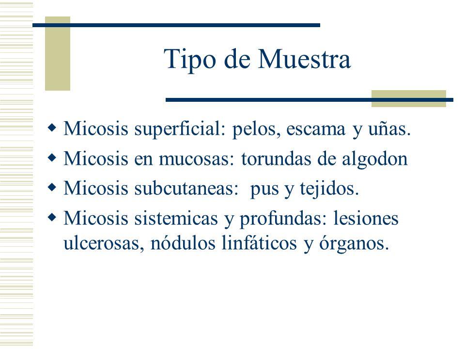 Tipo de Muestra Micosis superficial: pelos, escama y uñas. Micosis en mucosas: torundas de algodon Micosis subcutaneas: pus y tejidos. Micosis sistemi