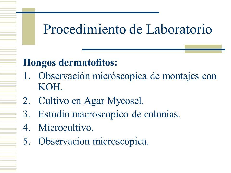 Procedimiento de Laboratorio Hongos dermatofitos: 1.Observación micróscopica de montajes con KOH. 2.Cultivo en Agar Mycosel. 3.Estudio macroscopico de
