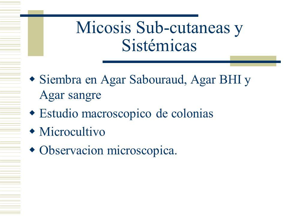 Micosis Sub-cutaneas y Sistémicas Siembra en Agar Sabouraud, Agar BHI y Agar sangre Estudio macroscopico de colonias Microcultivo Observacion microsco