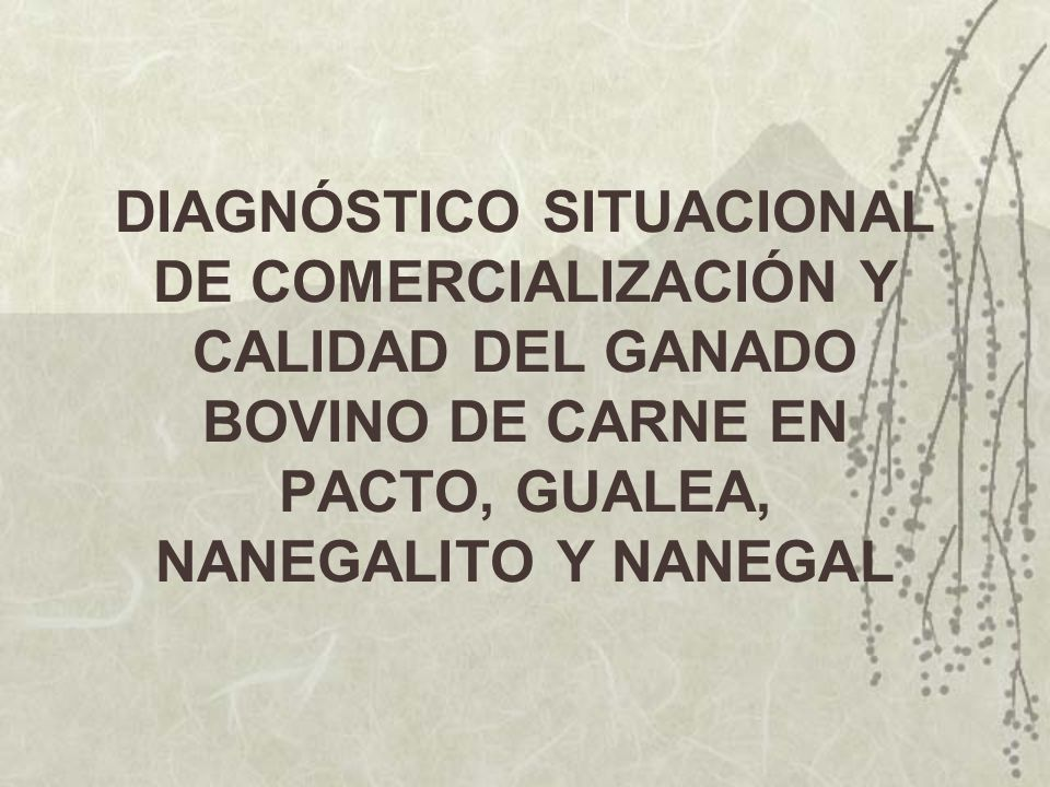 DIAGNÓSTICO SITUACIONAL DE COMERCIALIZACIÓN Y CALIDAD DEL GANADO BOVINO DE CARNE EN PACTO, GUALEA, NANEGALITO Y NANEGAL