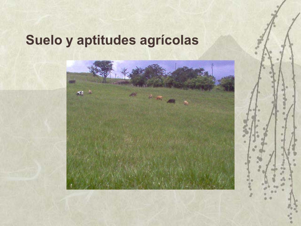 Suelo y aptitudes agrícolas
