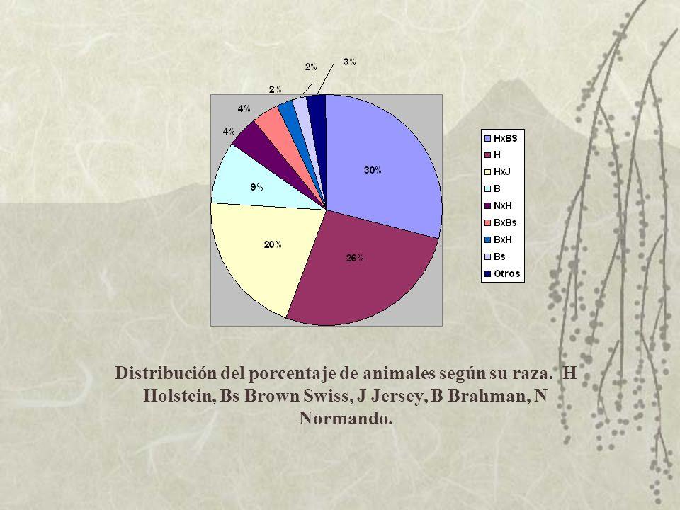 Distribución del porcentaje de animales según su raza. H Holstein, Bs Brown Swiss, J Jersey, B Brahman, N Normando.