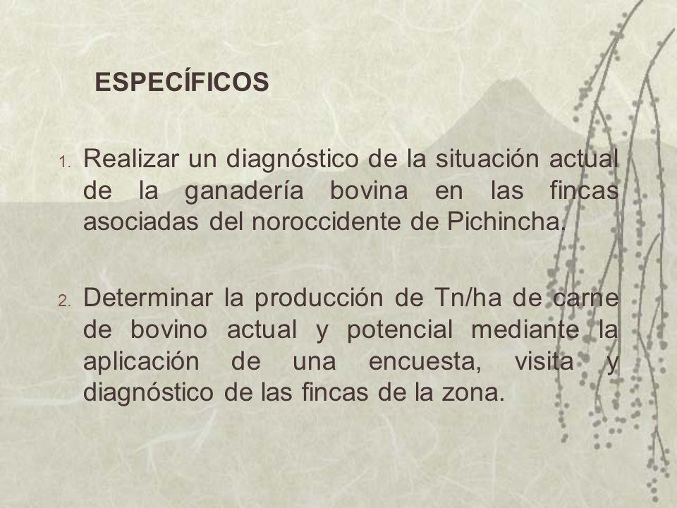 ESPECÍFICOS 1. Realizar un diagnóstico de la situación actual de la ganadería bovina en las fincas asociadas del noroccidente de Pichincha. 2. Determi