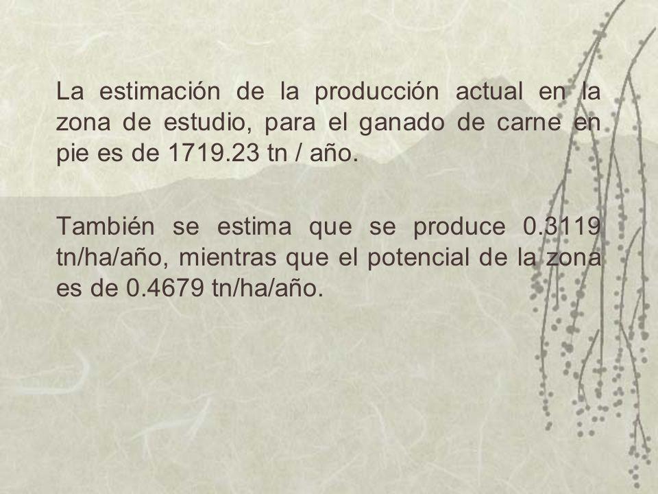 La estimación de la producción actual en la zona de estudio, para el ganado de carne en pie es de 1719.23 tn / año. También se estima que se produce 0
