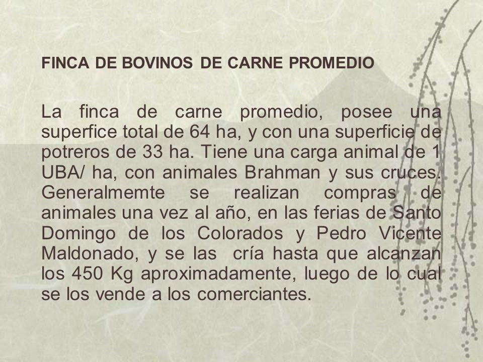 FINCA DE BOVINOS DE CARNE PROMEDIO La finca de carne promedio, posee una superfice total de 64 ha, y con una superficie de potreros de 33 ha. Tiene un