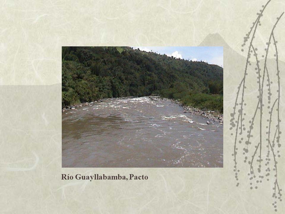 Río Guayllabamba, Pacto