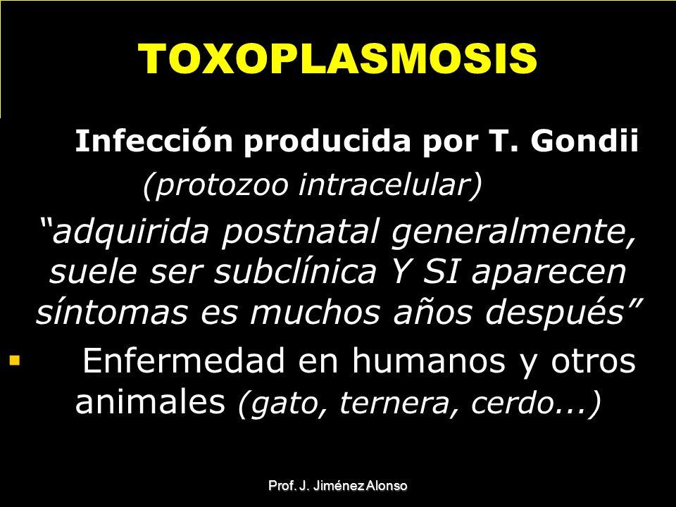 Prof. J. Jiménez Alonso TOXOPLASMOSIS Infección producida por T. Gondii (protozoo intracelular) adquirida postnatal generalmente, suele ser subclínica