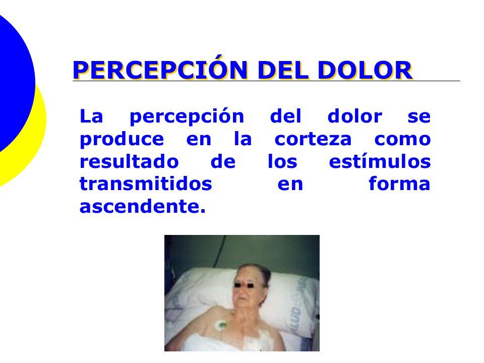 PERCEPCIÓN DEL DOLOR La percepción del dolor se produce en la corteza como resultado de los estímulos transmitidos en forma ascendente.