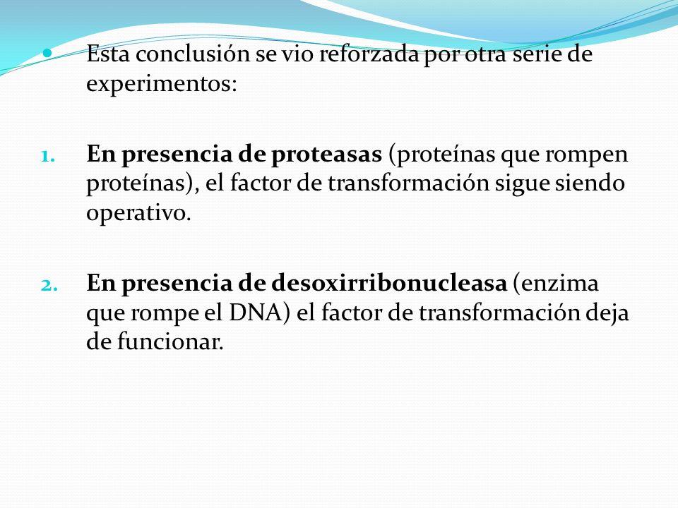 Esta conclusión se vio reforzada por otra serie de experimentos: 1. En presencia de proteasas (proteínas que rompen proteínas), el factor de transform