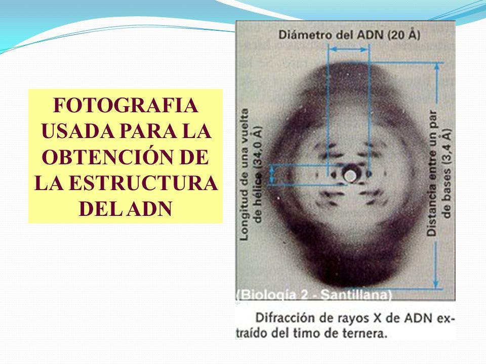 FOTOGRAFIA USADA PARA LA OBTENCIÓN DE LA ESTRUCTURA DEL ADN