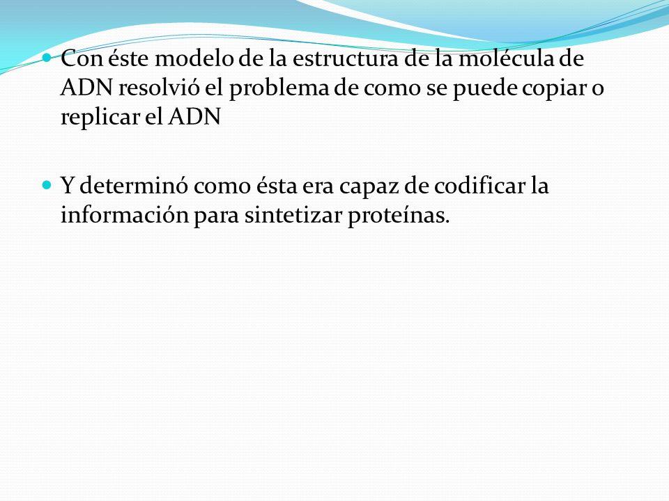 Con éste modelo de la estructura de la molécula de ADN resolvió el problema de como se puede copiar o replicar el ADN Y determinó como ésta era capaz de codificar la información para sintetizar proteínas.