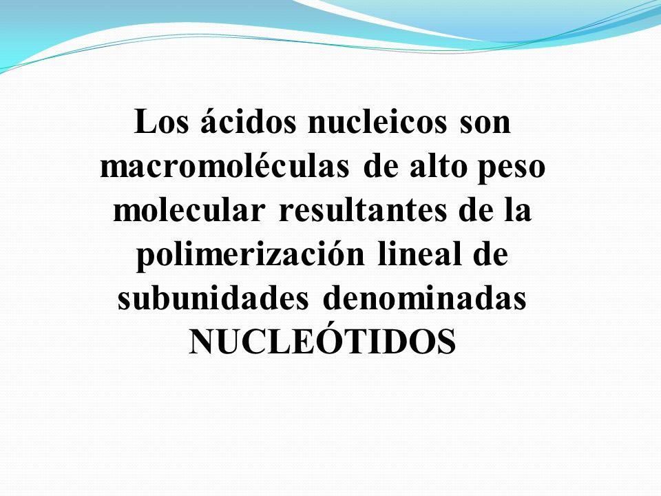 Los ácidos nucleicos son macromoléculas de alto peso molecular resultantes de la polimerización lineal de subunidades denominadas NUCLEÓTIDOS