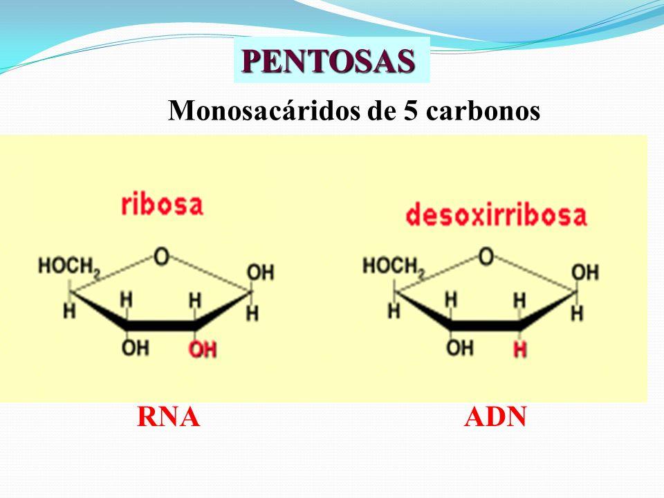 PENTOSAS Monosacáridos de 5 carbonos RNAADN