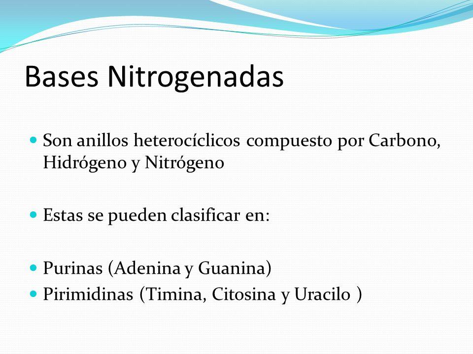 Bases Nitrogenadas Son anillos heterocíclicos compuesto por Carbono, Hidrógeno y Nitrógeno Estas se pueden clasificar en: Purinas (Adenina y Guanina)