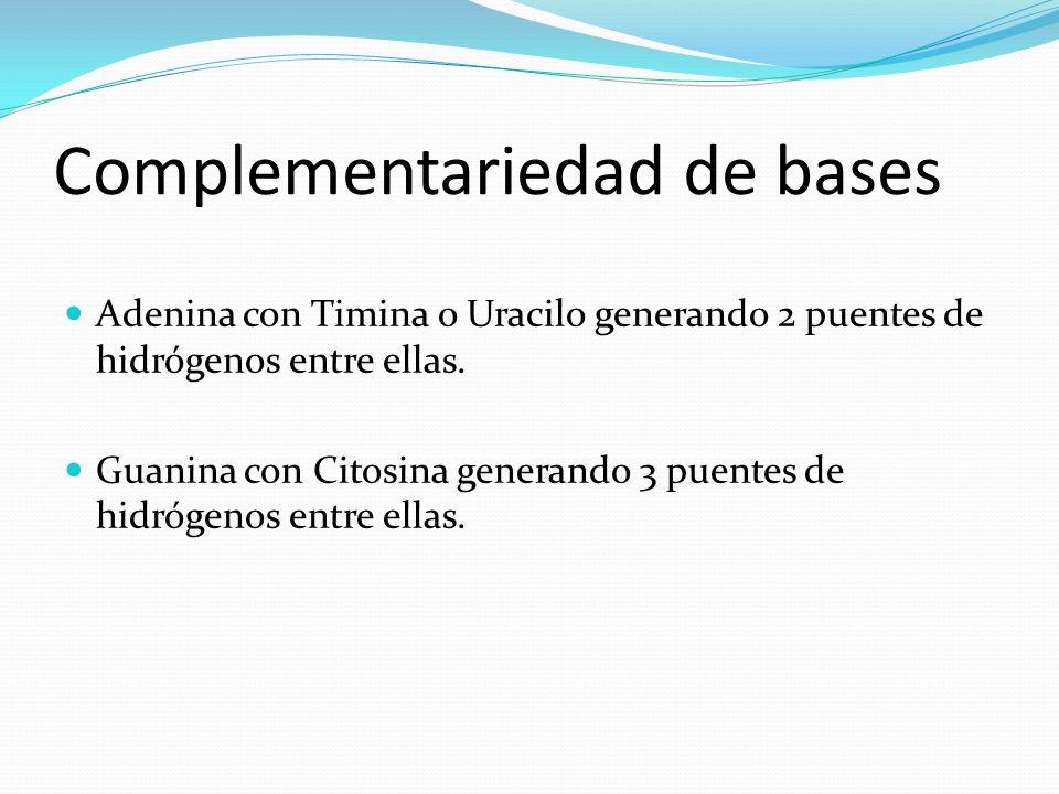 Complementariedad de bases Adenina con Timina o Uracilo generando 2 puentes de hidrógenos entre ellas. Guanina con Citosina generando 3 puentes de hid