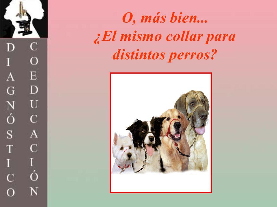 O, más bien... ¿El mismo collar para distintos perros?