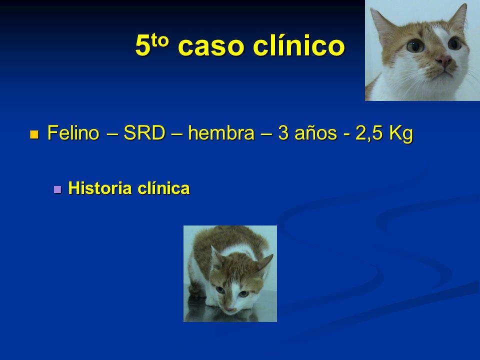 5 to caso clínico Felino – SRD – hembra – 3 años - 2,5 Kg Felino – SRD – hembra – 3 años - 2,5 Kg Historia clínica Historia clínica